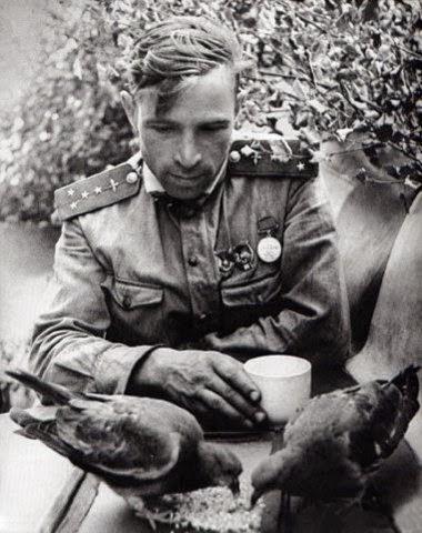 Тигр мировая война вторая мировая